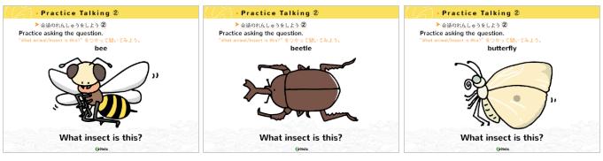 動物と虫の教材